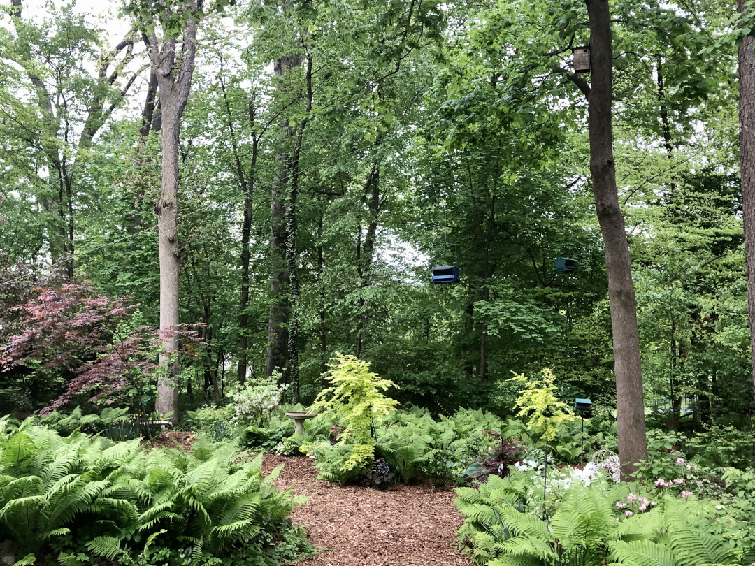 A shade garden filled with ferns
