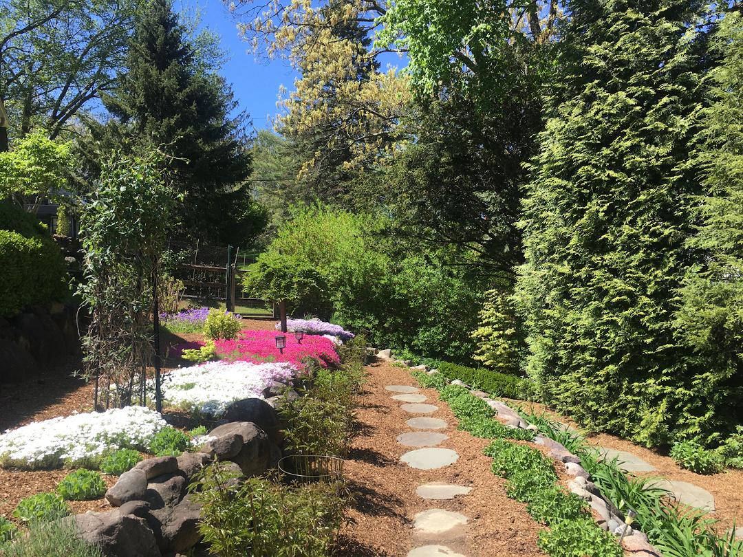 creeping phlox along a garden path