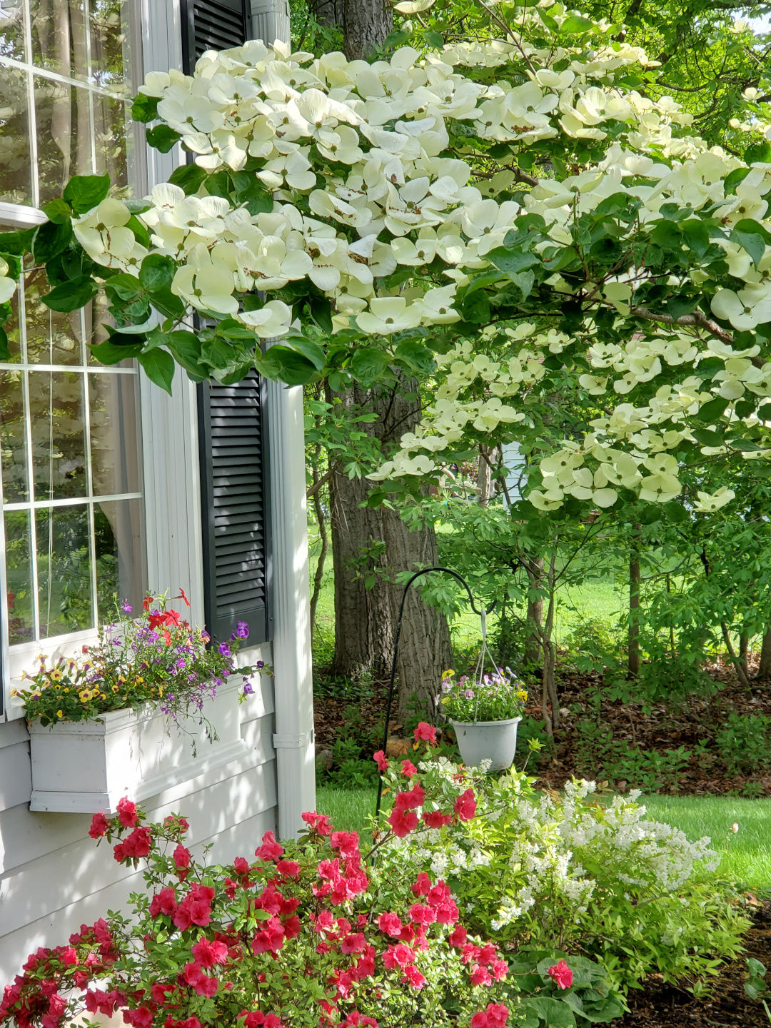 Blooming trees and shrubs by the side of a house